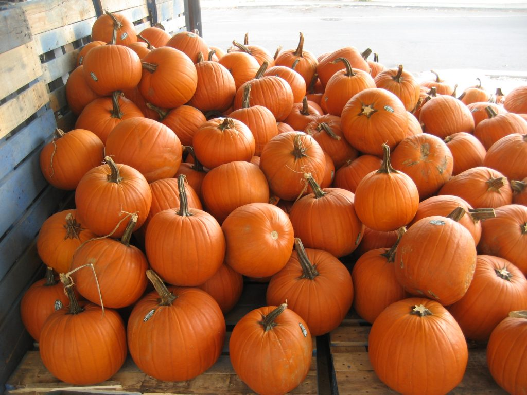 Hancock County this fall